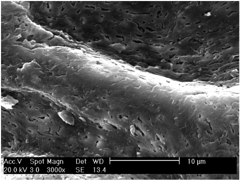 玻璃纤维增强 PEEK 粗化后的表面状态.png